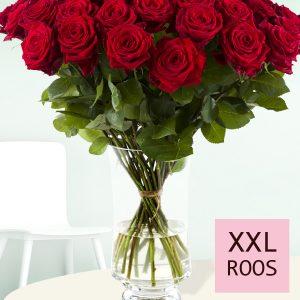 Rode rozen - Kies je aantal | Rozen online bestellen & versturen | Surprose.nl